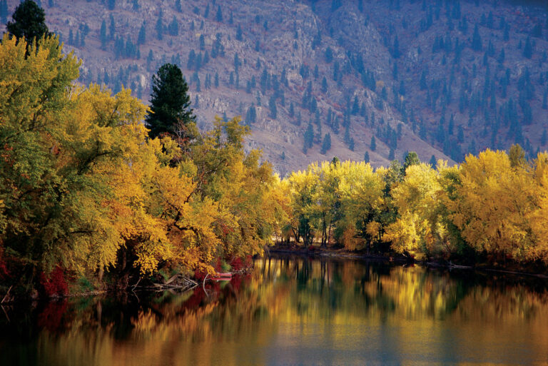 Bright and vivid autumn foliage surrounding Kettle River, BC.
